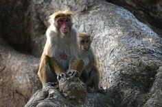 Park, Monkey, Primate, Ape, Wildlife, Nature #park, #monkey, #primate, #ape, #wildlife, #nature