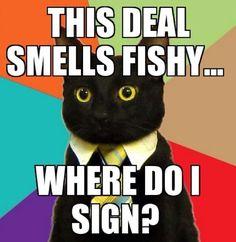 Business cat problems...