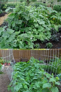 15 easy attractive DIY cucumber trellis ideas on how to build vertical garden growing structures with simple materials for productive vegetable gardening! - A Piece of Rainbow backyard, landscaping, gardening tips, homesteading Allotment Gardening, Backyard Vegetable Gardens, Container Gardening Vegetables, Veg Garden, Vegetable Garden Design, Gardening Tips, Diy Trellis, Trellis Ideas, Garden Trellis