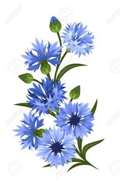 Branch Of Blue Cornflowers Vector Illustration Royalty Free Cliparts Vectors And Stock Illustration Pic 30679082 Illustration Blume, Botanical Illustration, Botanical Flowers, Botanical Art, Flowers Garden, Blue Flowers, Wild Flowers, Exotic Flowers, Yellow Roses