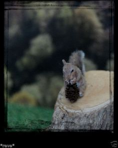 OOAK Realistic Squirrel Handmade Dollhouse Miniature 1:12 Sculpture by Reve