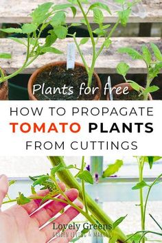 How to Propagate Tom