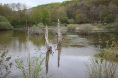Étendue d'eau qui se situe dans le bas du domaine de Port-Royal des Champs, au niveau de l'Abbaye.