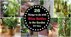 Strange Ways To Use 30 Most Common Household Things In Your Garden! | Balcony Garden Web