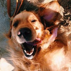 Don't you just want to smile when you see that one?  From doggiebl0ggie on tumblr.  #dogs #doglovers
