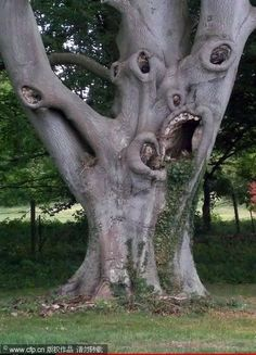 """Nature is full of scary stuff that will scare the hell out of you. These 29 creepy nature pictures are guaranteed to make you say, """"hell no! Weird Trees, Tree Faces, Unique Trees, Tree Art, Amazing Nature, Garden Sculpture, Nature Photography, The Incredibles, Crooked Teeth"""