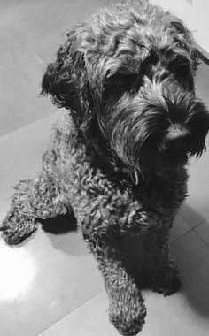 De liefste hond ter wereld