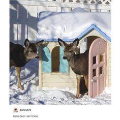 Funny Tumblr post | puns | memes