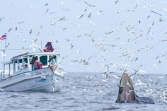 เรือที่ไปดูวาฬเป็นเรือประมงขนาดกลาง ที่มีการตกแต่งสำหรับนักท่องเที่ยวออกชมวาฬกลางทะเล ผู้ขับเรือเป็นไต๋กงผู้ชำนาญในทะเลอยู่แล้ว และมีความรู้ในทะเล ดังนั้นการเดินเรือกลางทะเลจึงมีความรู้เรื่องลมทะเล คลื่นและการวิ่งเรือ และมีใบผู้ขับเรืออย่างถูกต้อง เรือทุกลำที่ออกมีเสื้อชูชีพปลอดภัย และมีการกำหนดจำนวนคนตามขนาดของเรืออย่างถูกต้อง ถ้าผิดจากนี้ก็จะไม่ออกบริการให้นักท่องเที่ยว
