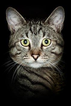 Big eyed kitty