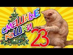 Смешные кошки 23 ● Кошки и Ёлки - Приколы с животными 2015 ●  Funny cats vine compilation - Part 23 - Cats and Christmas trees