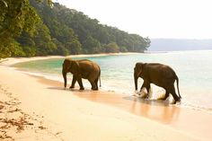 Sailing Yacht Charter in the Andaman Islands (India) — Burma Boating: Sailing Holidays, Yacht Charters and Private Cruises in Myanmar & Beyond Boating License, Andaman Islands, Cute Baby Elephant, Sailing Holidays, Elephant Sanctuary, Charter Boat, African Elephant, Archipelago, Places To Visit