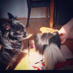 Basse & Zoey - DoggieBag.no #DoggieBag #Hund