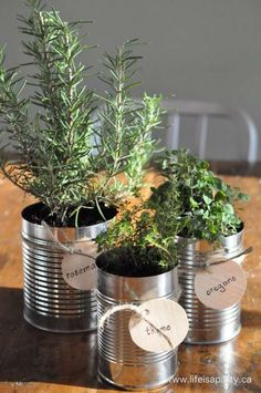 Tin Can Herb Garden. fun for window sill! Tin Can Herb Garden. fun for window sill!