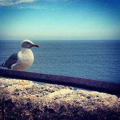 #Rocher У-у-умиротворение #море #птица #чайка #спокойствие #юг #south #wearesouth #bird #seagull #sea #ig_sea #ig_view #igers #traveligers #ig_bird #tranquilite #monaco by missd_langdon from #Montecarlo #Monaco
