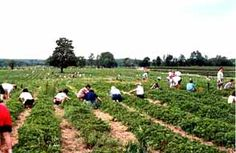 Pick Your Own - Andrews' Scenic Acres