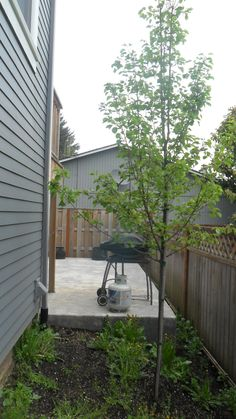 Sellwood Family  - a little sparse on the outdoor entertainment area.