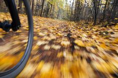 Panning: Capture Motion Blur and Keep your Subject in Focus - Digital Photo Secrets