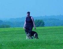 http://www.examiner.com/german-shepherd-in-akron/what-is-rally-obedience-part-1    Rally obedience is quickly becoming more and more popular with dog owners.  German Shepherd Dogs can do very well with Rally!  Read this two part article to find out more about it.