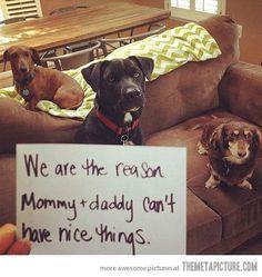 The best dog shaming yet