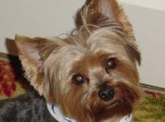 Flea Eliminator Dog Treats