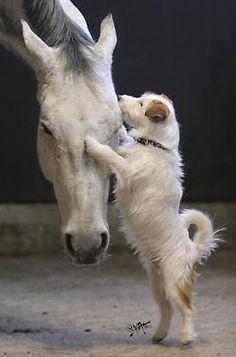 Dog horse love