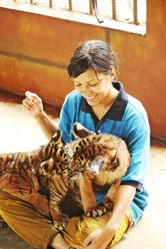 play with baby tigers.
