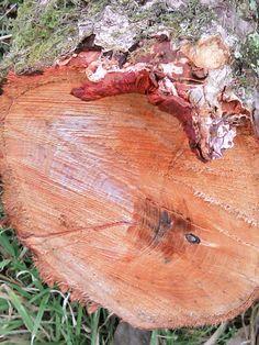 Freshly sawn wood - nice orange