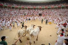 Pamplona: Participants run in front of Dolores Ybarra's bulls