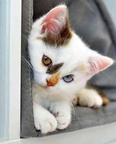 Kitteh Kats. Cat Photos, Cat Gifs, Cat Funny, Kitten pics, lots of Kittens. You know, kitty stuff. Kat, Kot, Katzen, Gatos, Gatitos,