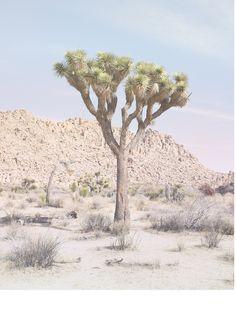 Allison Watkins, Joshua Tree No.14