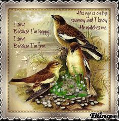 I sing because I'm happy. I sing because I'm free.His eye is on the sparrow.and I know He watches me! Scripture Verses, Bible Scriptures, Bible Quotes, Scripture Canvas, Healing Scriptures, Biblical Quotes, Praise Songs, Praise And Worship, Spiritual Songs