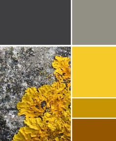 This colour scheme is great. The beauty of nature! The grey tones work excellently with the yellow through to brown.