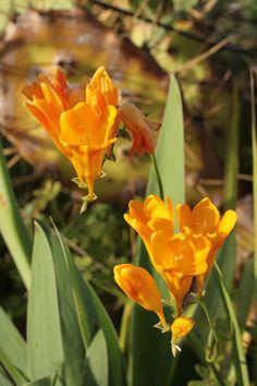 Wild spring flowers algarve portugal casa alegre rich yellow flowers algarve portugal casa alegre mightylinksfo