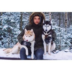 #husky #siberian #forest #nature #snow #green #2015