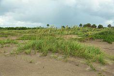 Beach Garden by John M Bailey  #Florida #photography #PhotoArt #beach #morning