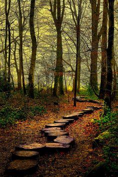 Westonbirt Woods, England