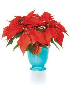 Try a fun twist on displaying poinsettias by showing off a single stem in a bud vase. #RSHoliday