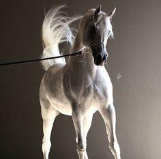Basic Rules About Horseback Riding For Beginners - FashionActivation Beautiful Arabian Horses, Majestic Horse, Egyptian Arabian Horses, Horses And Dogs, Animals And Pets, Arabian Stallions, Andalusian Horse, Friesian Horse, Palomino