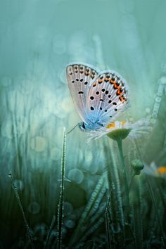 Fresh by Wil Mijer on 500px