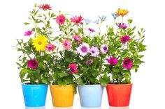Test Your Colorado Gardening Know-How Diy Planters, Planter Pots, Country Life Magazine, Free Jigsaw Puzzles, Painted Flower Pots, Painting Tips, Luau, Potted Plants, Potted Flowers