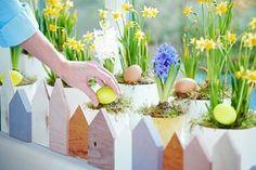 Indoor-Garten mit Zaun