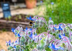 Un jardin en pots grâce aux huiles essentielles doterra