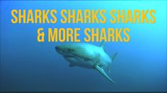 There are 12 living Orders of sharks and rays swimming in our oceans today, and more than 440 known species. Here are some of the wackier ones! -------------...