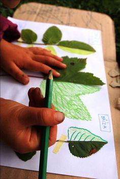 Leaf – cloth We teach outside Fall Crafts For Kids, Toddler Crafts, Preschool Crafts, Art For Kids, Forest School Activities, Autumn Activities, Activities For Kids, Tree Study, Autumn Art