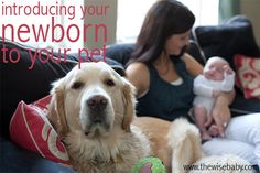 A Closer Look: Introducing Your Baby To Your Pet • The Wise Baby, photo credit: Susan Jackson Photography