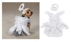 Angel Paws Costumes for Dogs - Dog Costume with Angel Theme