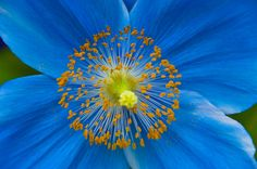 Blue beauty - Justin Rice