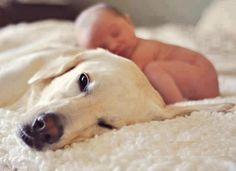 I hope my crazy puppy si will hold still long enough to get a picture like this with our baby boy!