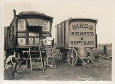 Manders Menagerie. Photo courtesy of the Arthur J Fenwick Collection of circus material, Tyne & Wear Archives & Museums